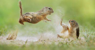 Fotowettbewerb der Naturschutzstiftung: Deadline rückt näher