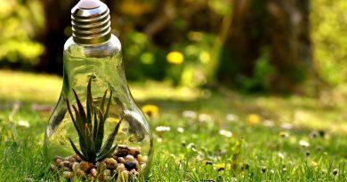 Pflanze in Glühbirne