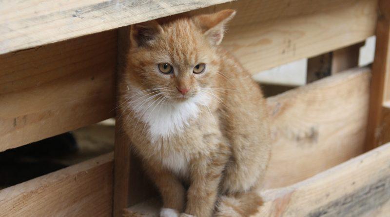 herrenlose Katze